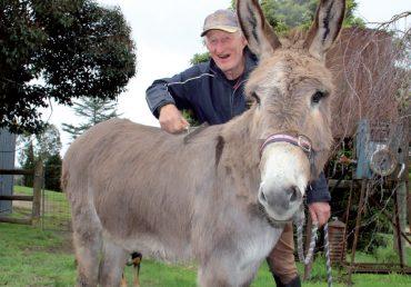 Donkey Digest